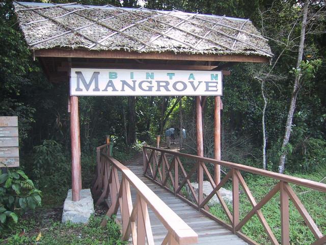マングローブ入口